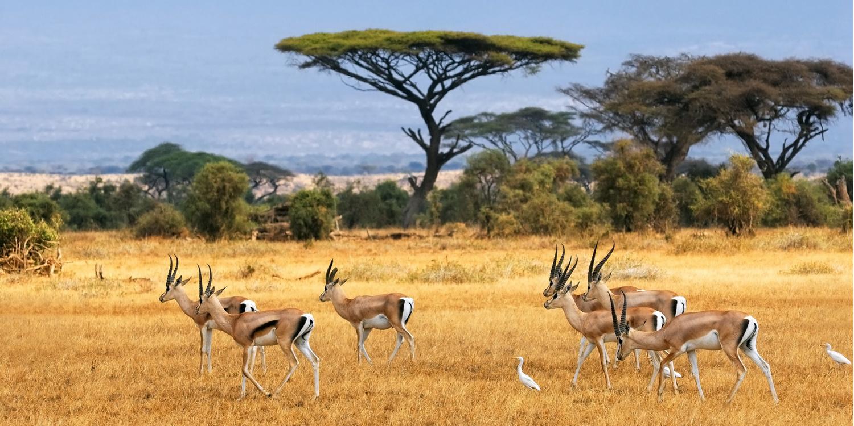 Réserver un safari à la carte avec safarivo.com