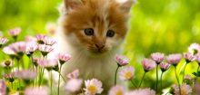 Comment éloigner les chats du jardin ?
