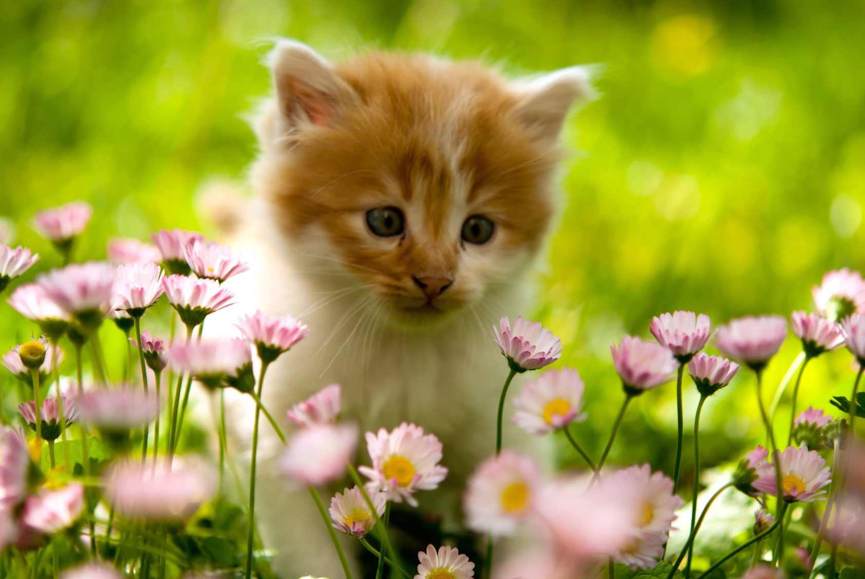 Comment loigner les chats du jardin - Eloigner les chats du jardin ...
